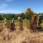 Excavating Japanese Knotweed in Devon