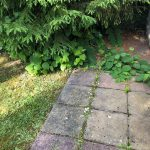 japanese knotweed surveys removal bristol somerset